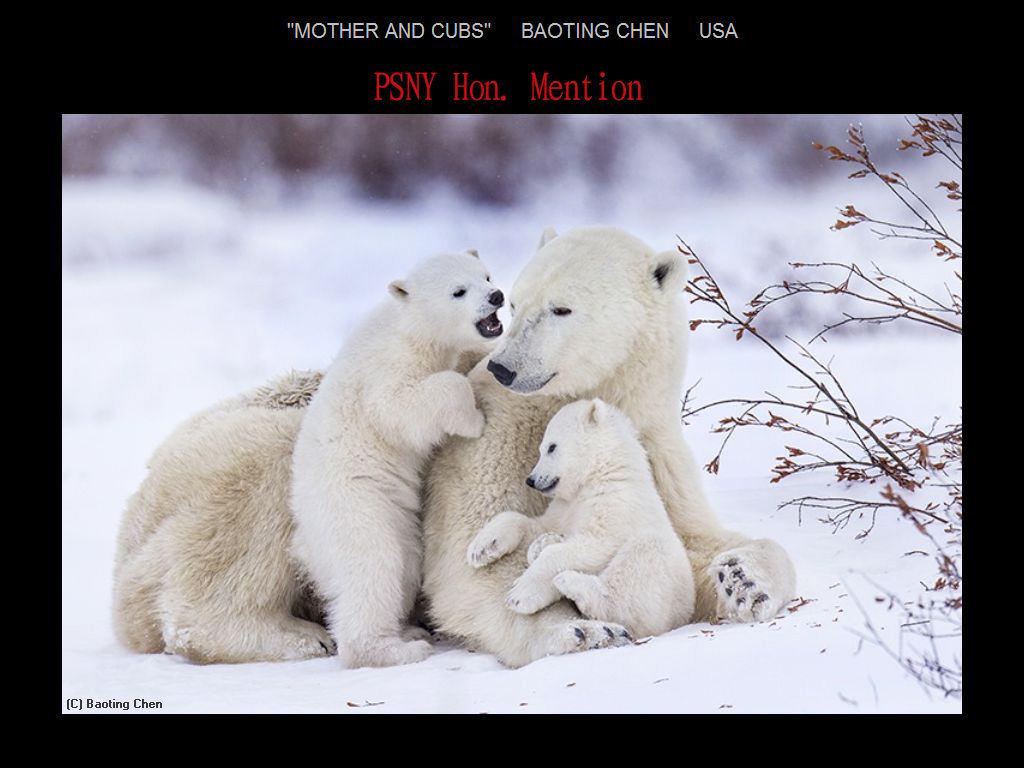 纽约摄影学会2017年沙龍數碼自然組獲獎作品_图1-22