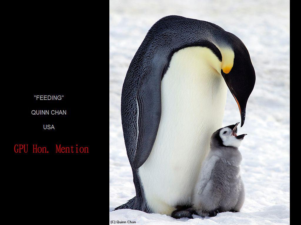 纽约摄影学会2017年沙龍數碼自然組獲獎作品_图1-21