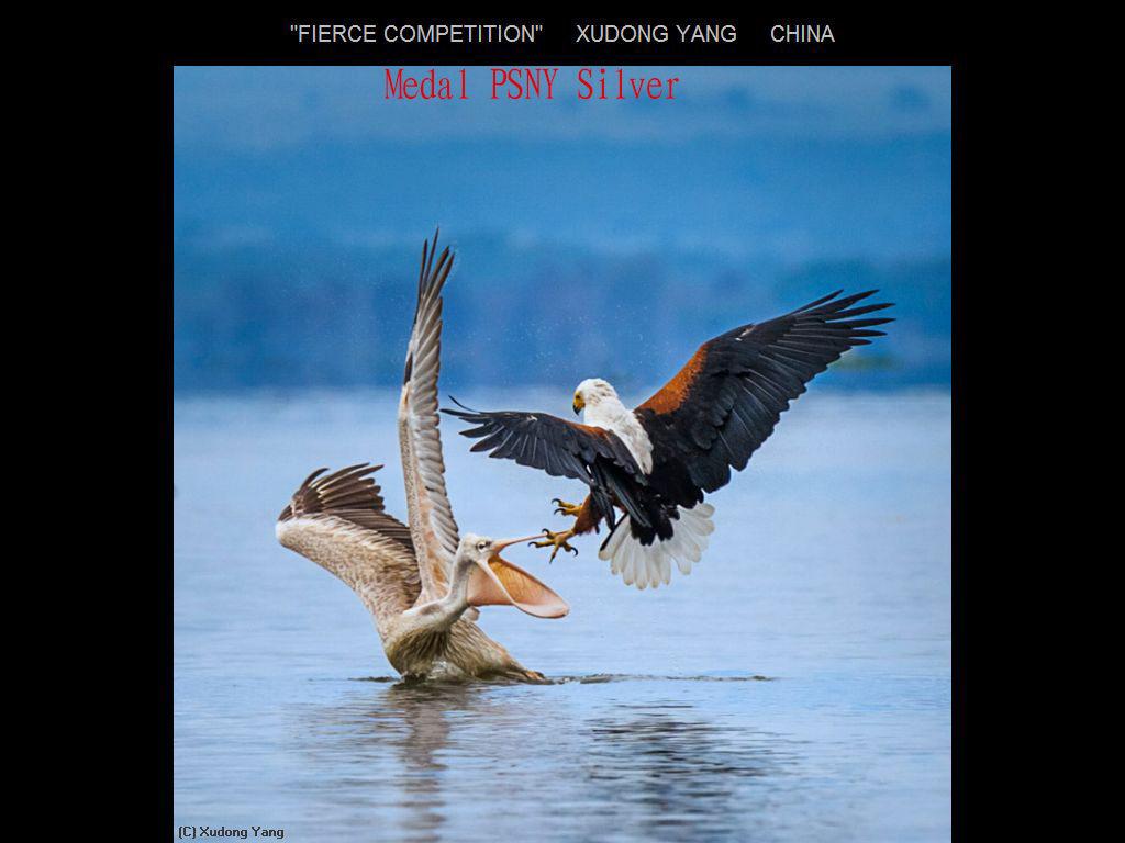 纽约摄影学会2017年沙龍數碼自然組獲獎作品_图1-19