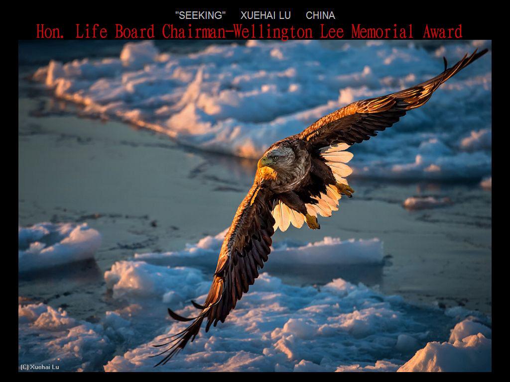 纽约摄影学会2017年沙龍數碼自然組獲獎作品_图1-16