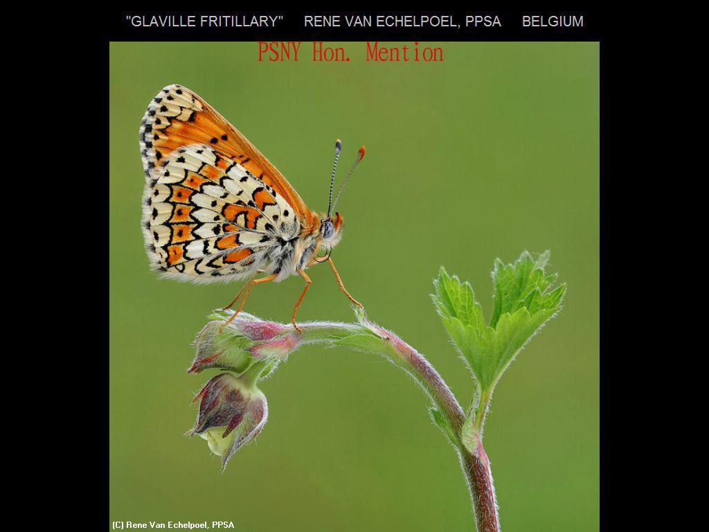 纽约摄影学会2017年沙龍數碼自然組獲獎作品_图1-15
