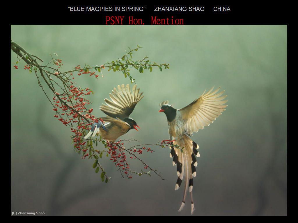 纽约摄影学会2017年沙龍數碼自然組獲獎作品_图1-14