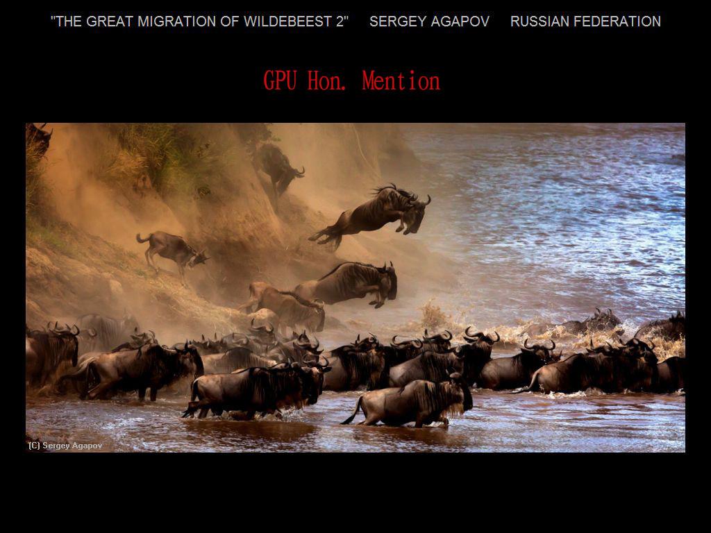 纽约摄影学会2017年沙龍數碼自然組獲獎作品_图1-7