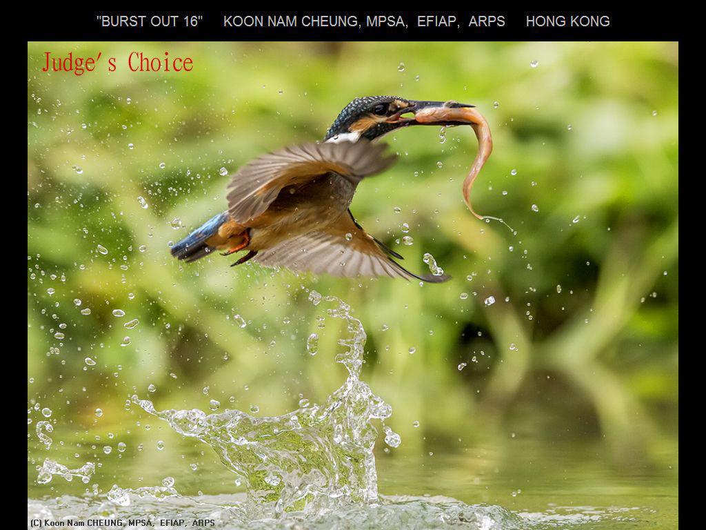 纽约摄影学会2017年沙龍數碼自然組獲獎作品_图1-5