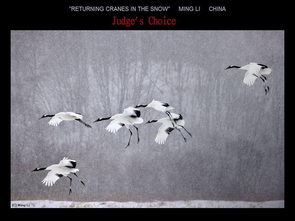 纽约摄影学会2017年沙龍數碼自然組獲獎作品_图1-6