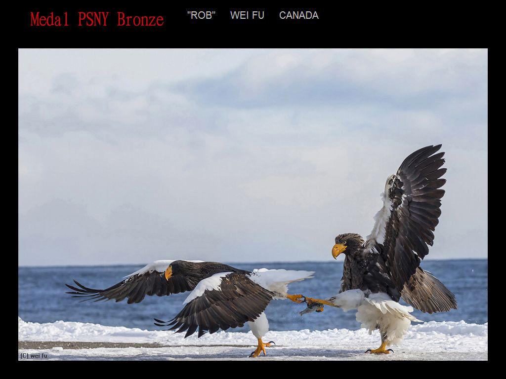 纽约摄影学会2017年沙龍數碼自然組獲獎作品_图1-4