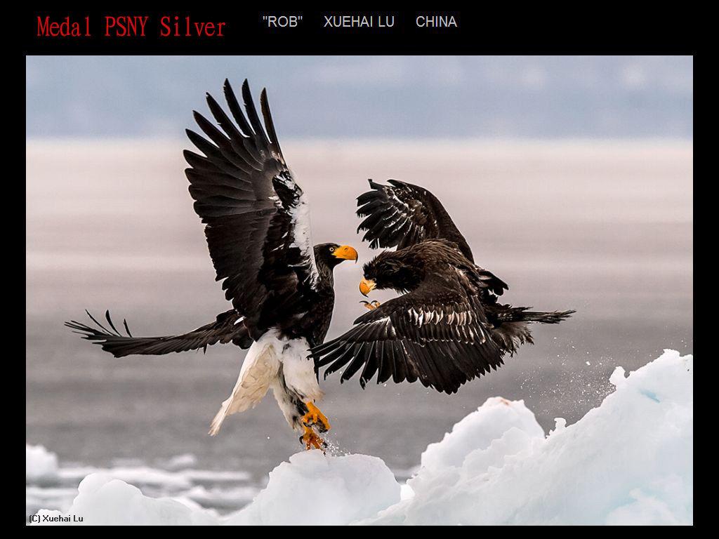 纽约摄影学会2017年沙龍數碼自然組獲獎作品_图1-2