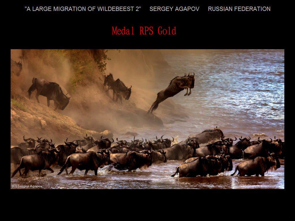 纽约摄影学会2017年沙龍數碼自然組獲獎作品_图1-1