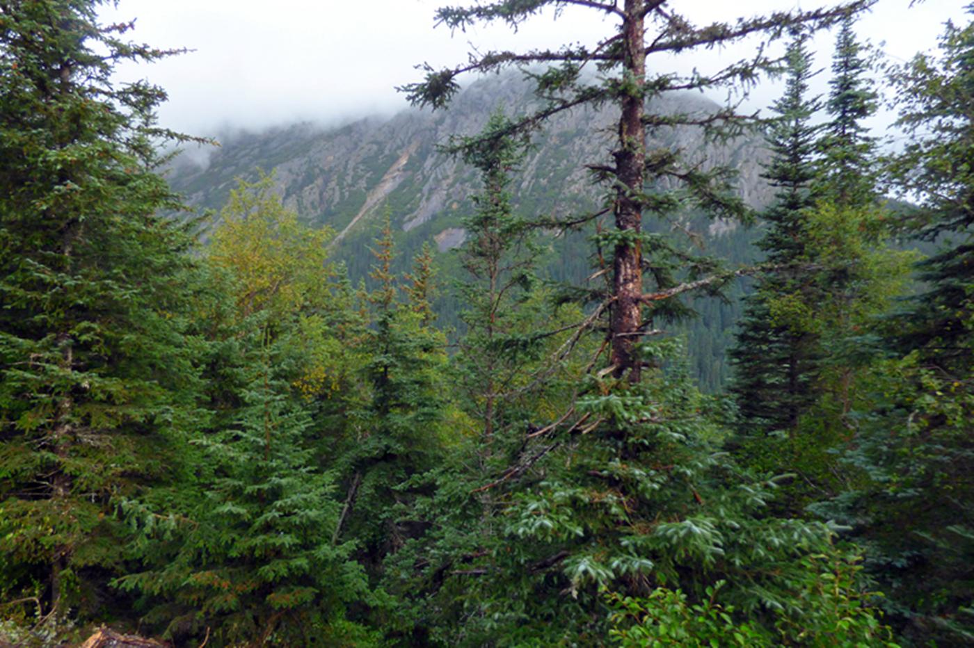 阿拉斯加,那山、那水、那人……_图1-19
