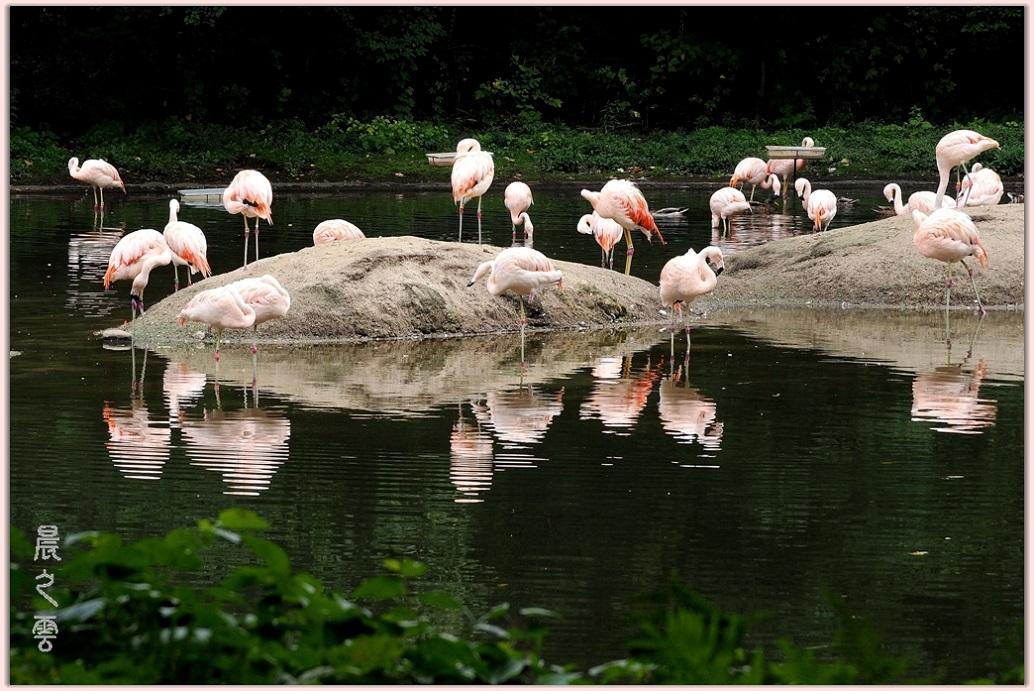 火烈鸟——Flamingo_图1-10