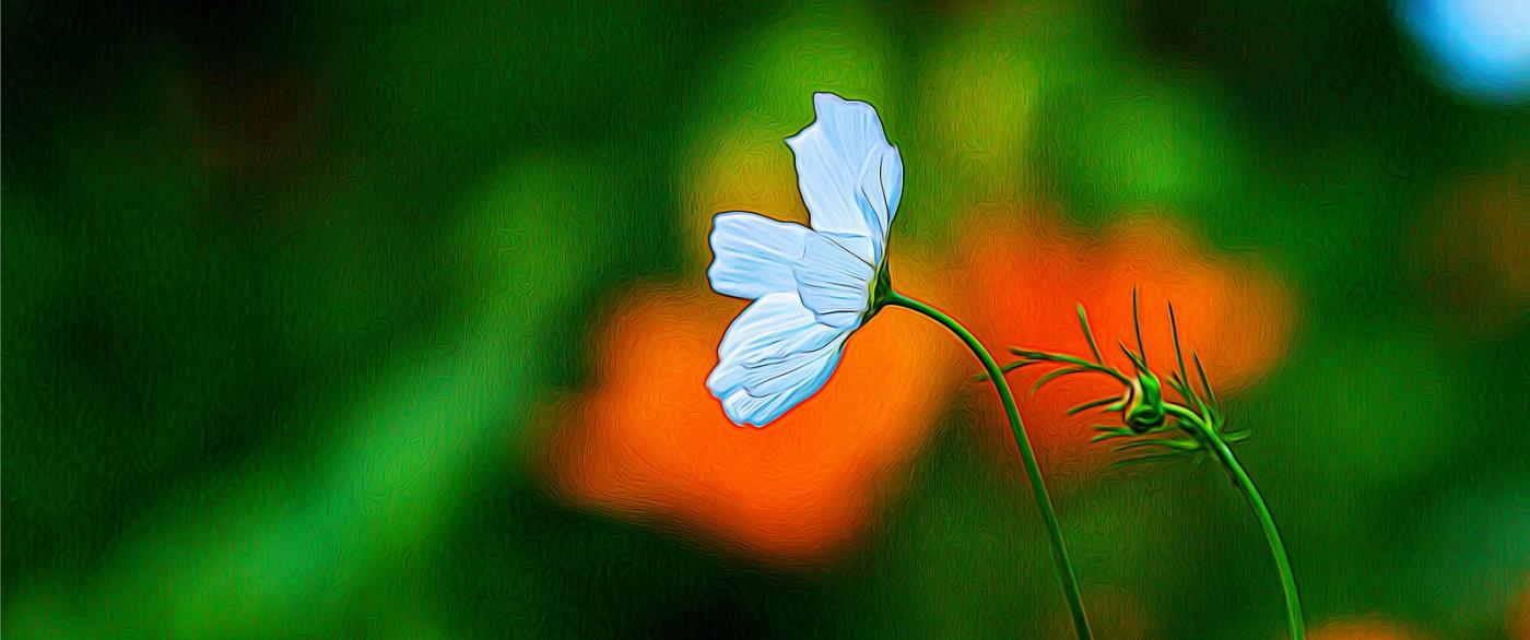 春天的呼唤_图1-4