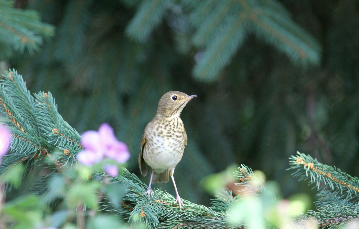 【田螺随拍】在后院放一个喂鸟