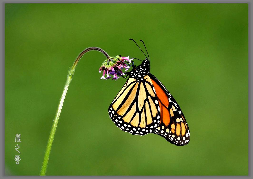 又是拍蝴蝶的时候_图1-1