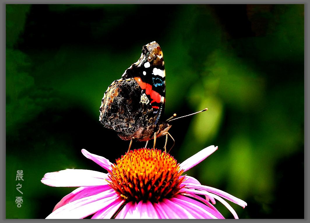 又是拍蝴蝶的时候_图1-2
