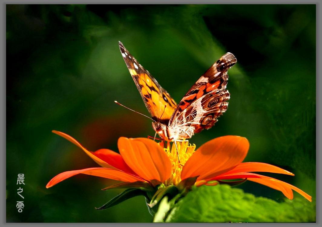 又是拍蝴蝶的时候_图1-3