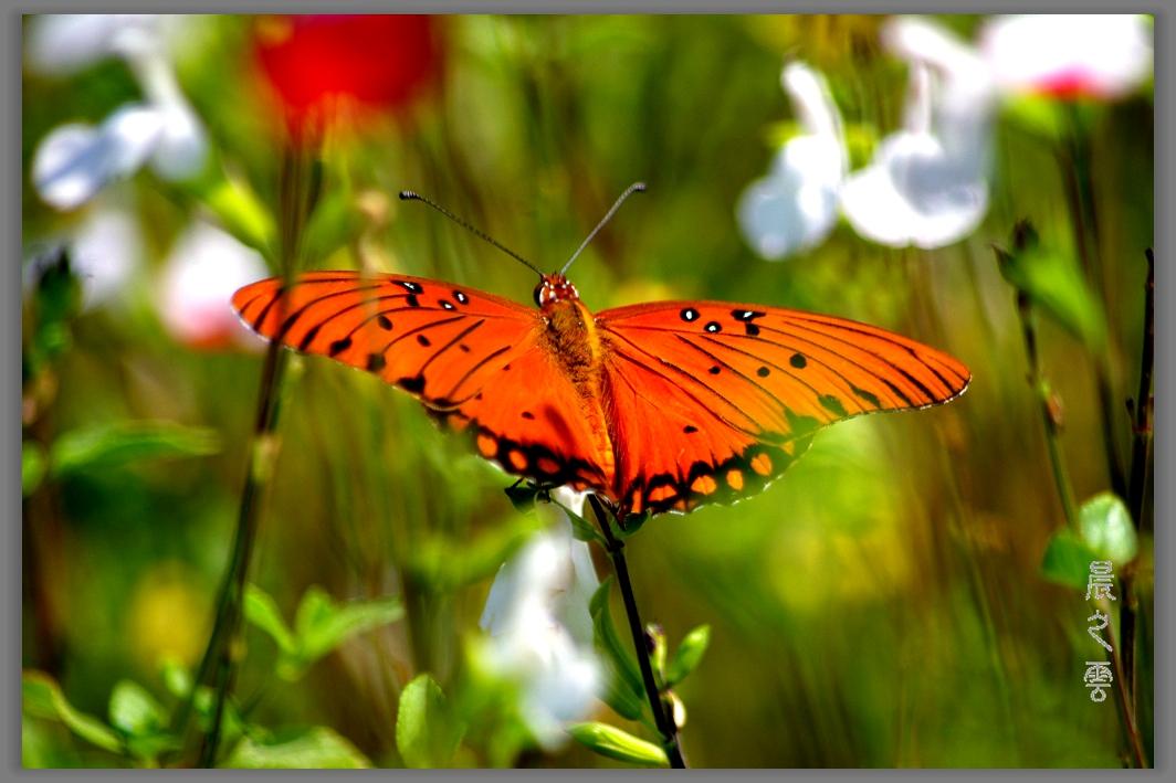 又是拍蝴蝶的时候_图1-4