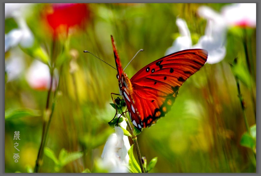 又是拍蝴蝶的时候_图1-5