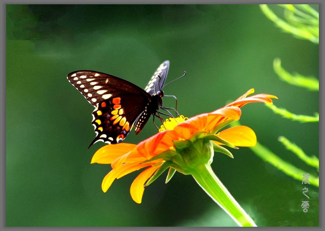 又是拍蝴蝶的时候_图1-6