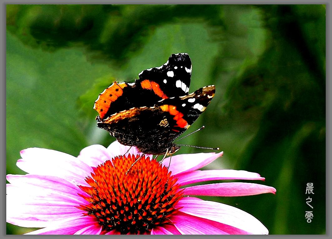 又是拍蝴蝶的时候_图1-7