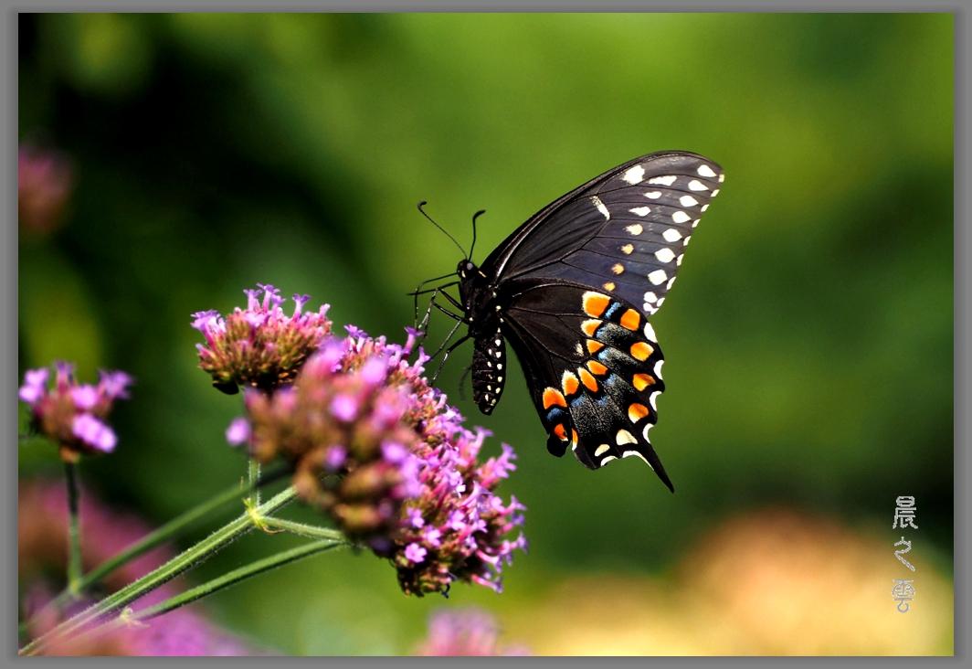 又是拍蝴蝶的时候_图1-8