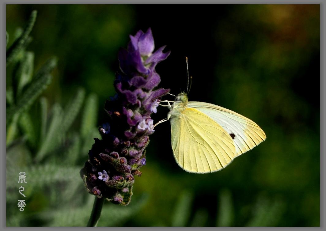 又是拍蝴蝶的时候_图1-9