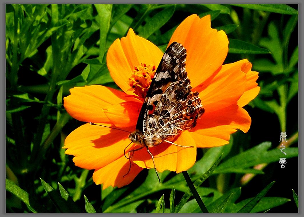又是拍蝴蝶的时候_图1-10