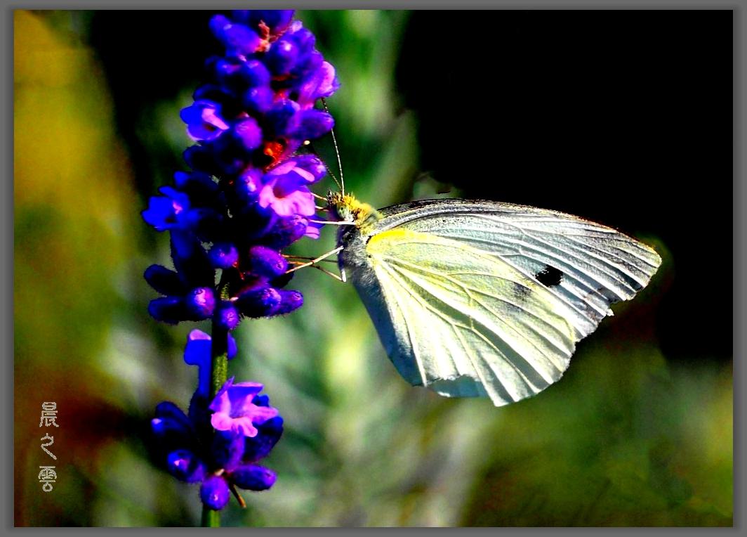 又是拍蝴蝶的时候_图1-11