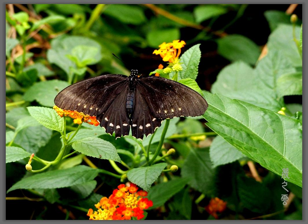 又是拍蝴蝶的时候_图1-12
