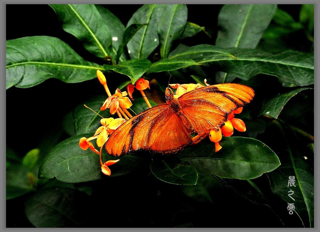又是拍蝴蝶的时候_图1-13