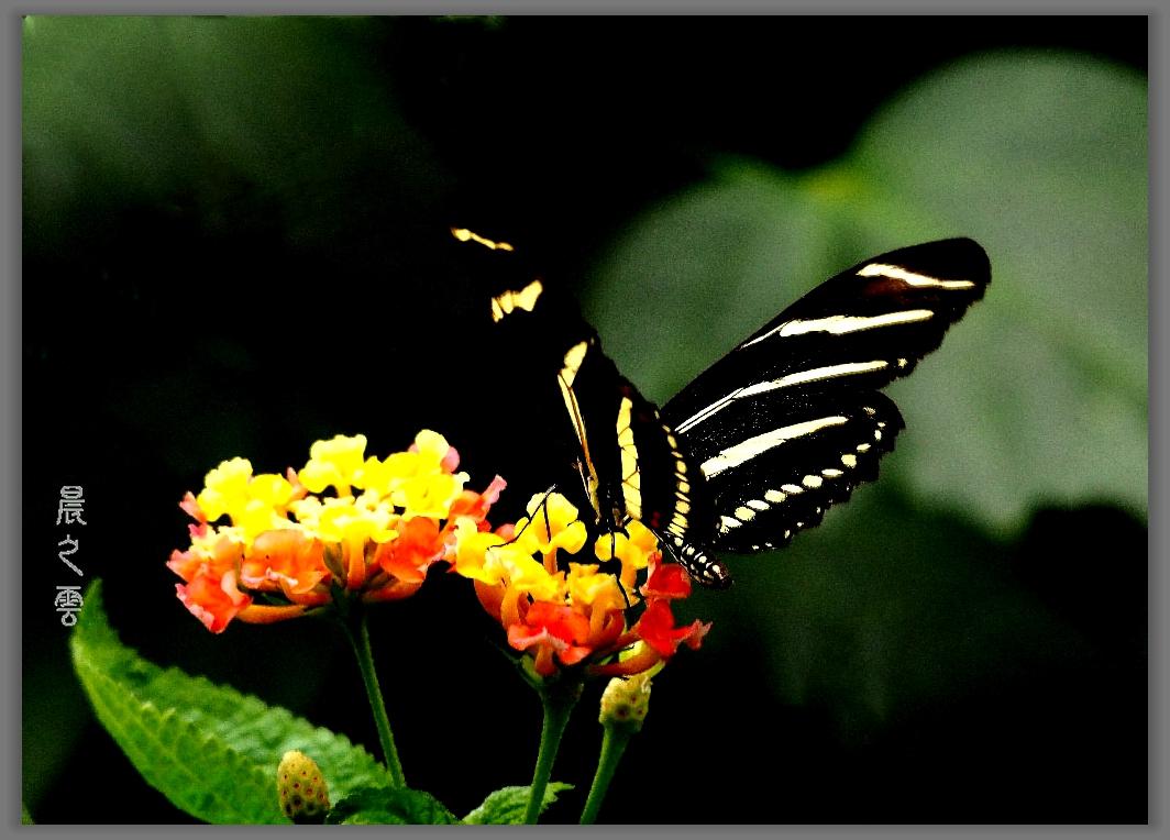 又是拍蝴蝶的时候_图1-14