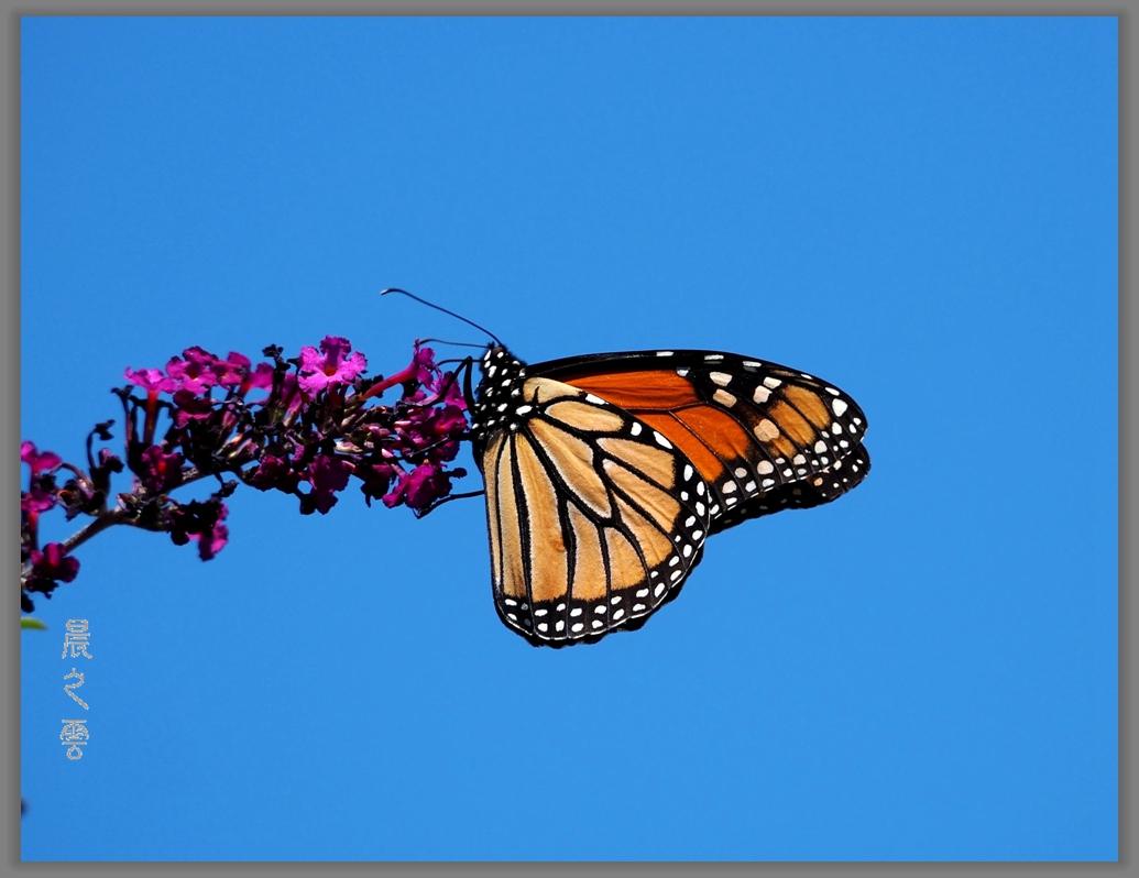 又是拍蝴蝶的时候_图1-15