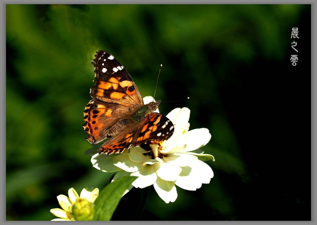 又是拍蝴蝶的时候_图1-16