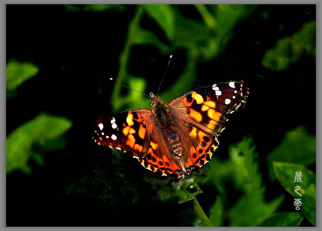 又是拍蝴蝶的时候_图1-17