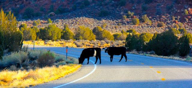 行走在犹他州95号公路沿途_图1-20