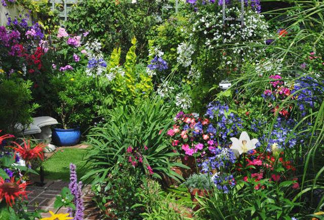 Lyn malcolms Garden 花园_图1-6