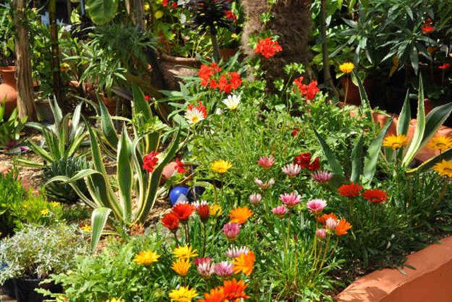 Lyn malcolms Garden 花园_图1-14