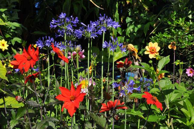 Lyn malcolms Garden 花园_图1-22