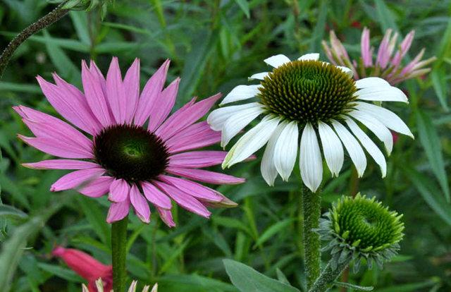 Lyn malcolms Garden 花园_图1-24
