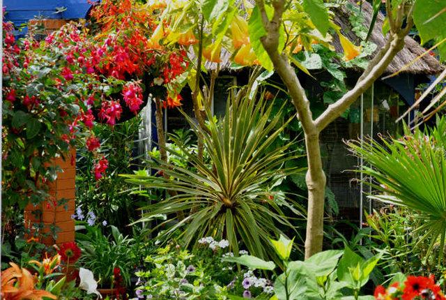 Lyn malcolms Garden 花园_图1-25