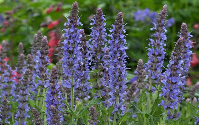 Lyn malcolms Garden 花园_图1-27