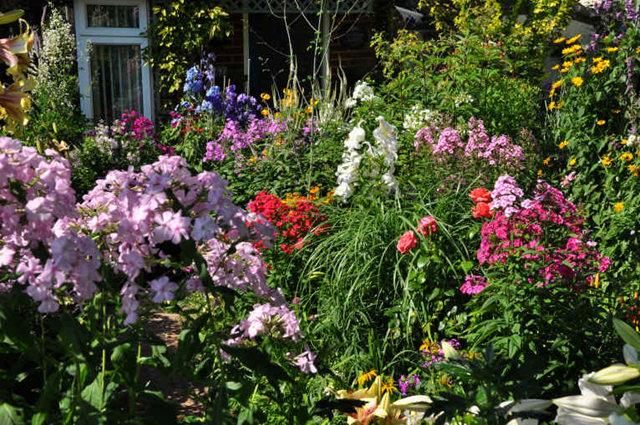 Lyn malcolms Garden 花园_图1-29