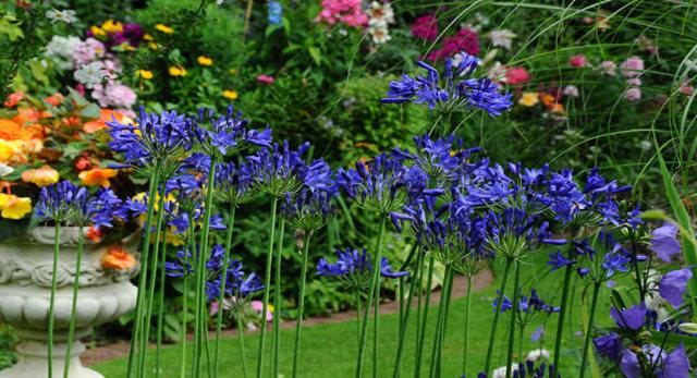 Lyn malcolms Garden 花园_图1-30
