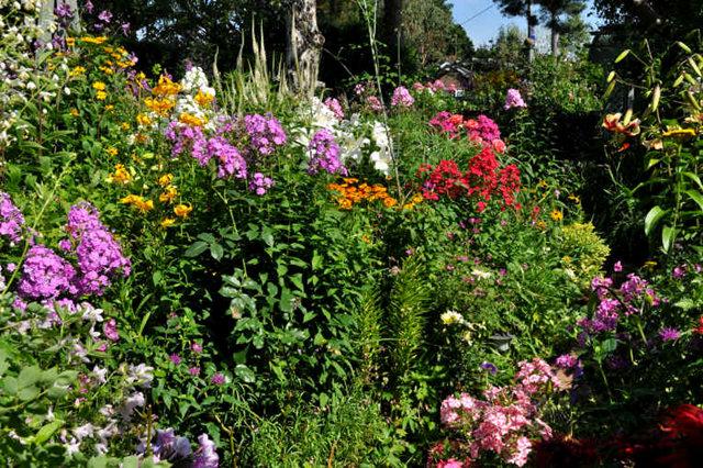 Lyn malcolms Garden 花园_图1-31