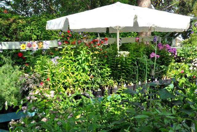 Lyn malcolms Garden 花园_图1-33