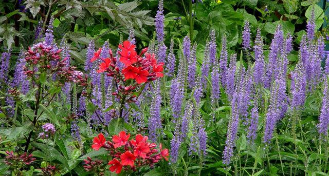 Lyn malcolms Garden 花园_图1-34