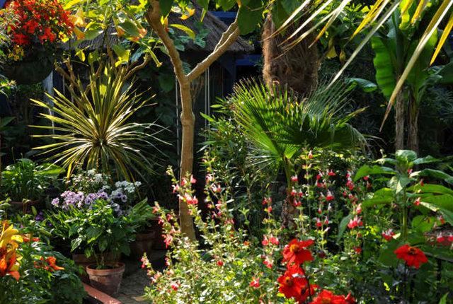 Lyn malcolms Garden 花园_图1-35