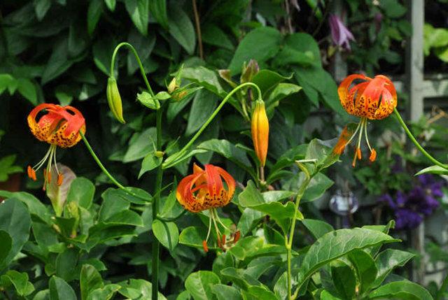 Lyn malcolms Garden 花园_图1-36