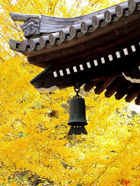 京都行之......真如堂_图1-28