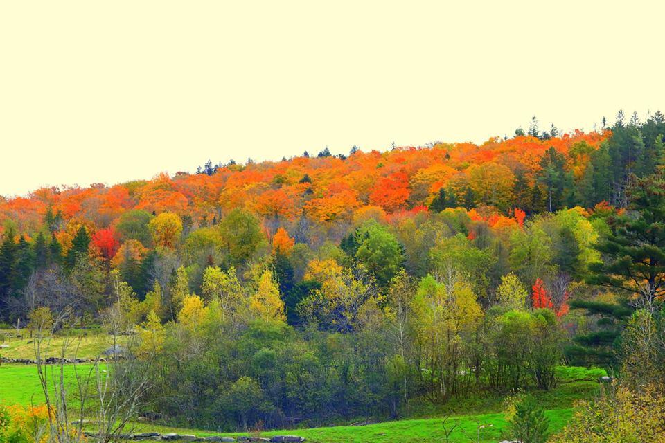 (原创摄影)Vermont之行 (1)_图1-12