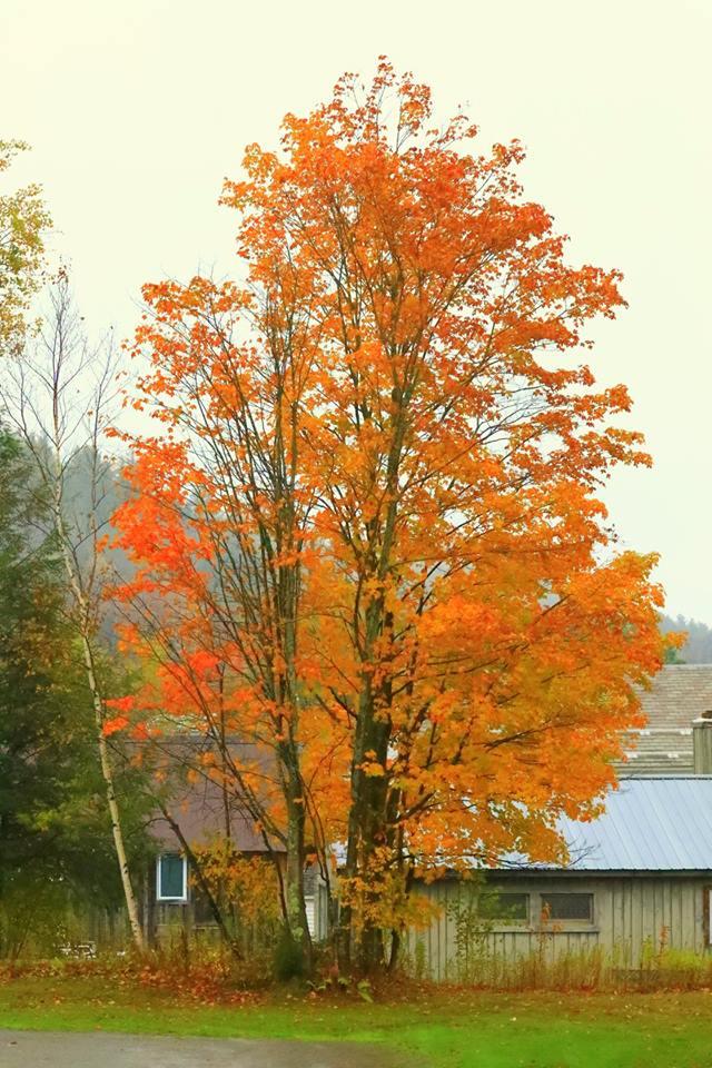 (原创摄影)Vermont之行 (1)_图1-10